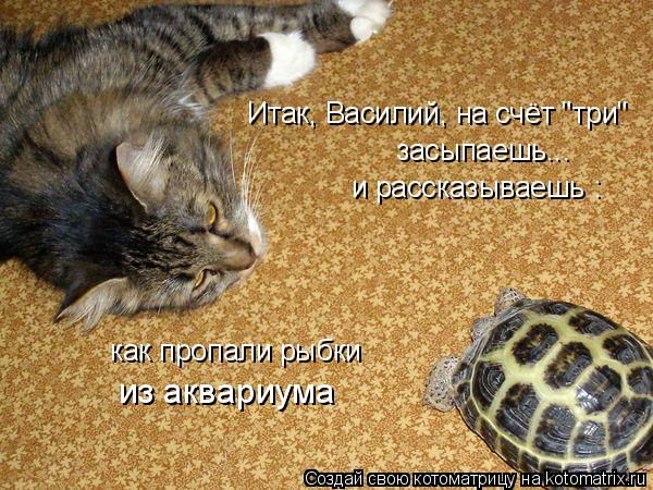 """Котоматрица: Итак, Василий, на счёт """"три"""" засыпаешь... и рассказываешь : как пропали рыбки из аквариума"""