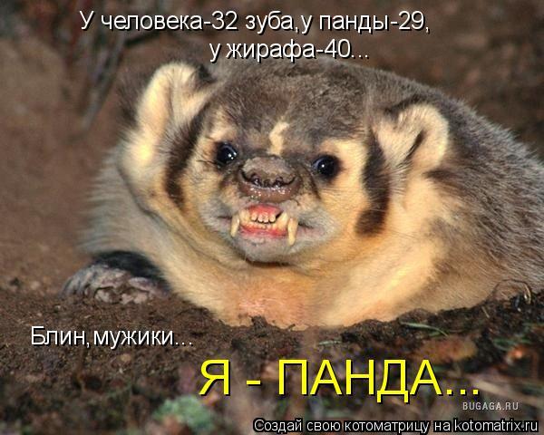 Котоматрица: У человека-32 зуба,у панды-29, у жирафа-40... Блин,мужики... Я - ПАНДА...