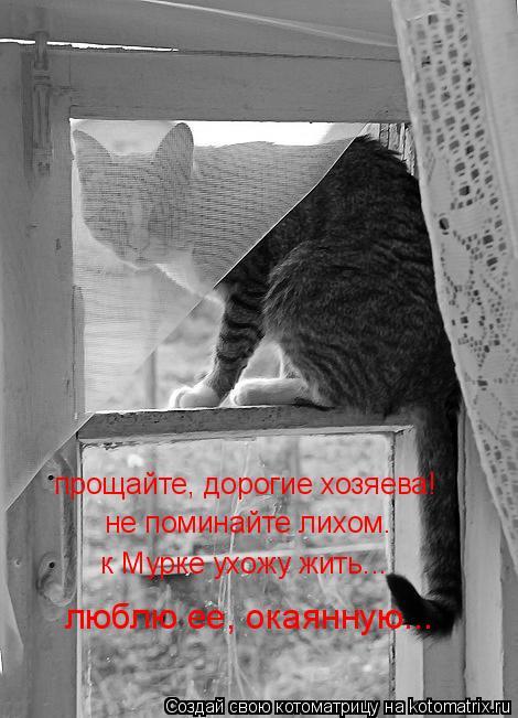 Котоматрица: прощайте, дорогие хозяева! не поминайте лихом. к Мурке ухожу жить... люблю ее, окаянную...