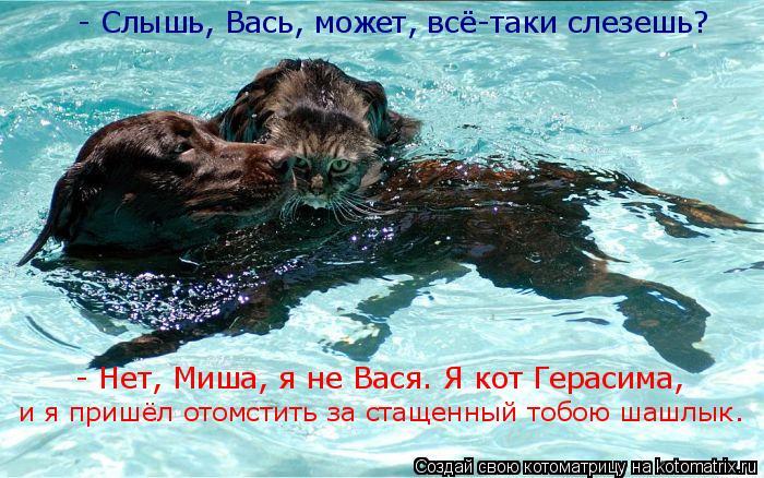 Котоматрица: - Слышь, Вась, может, всё-таки слезешь?  - Нет, Миша, я не Вася. Я кот Герасима, и я пришёл отомстить за стащенный тобою шашлык.