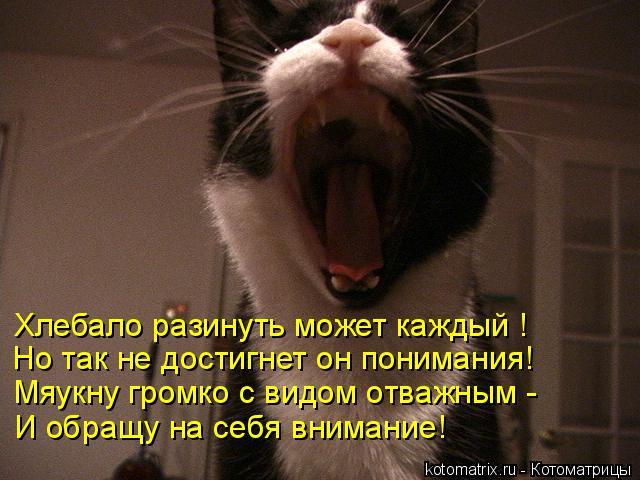 Котоматрица: Хлебало разинуть может каждый ! Но так не достигнет он понимания!  Мяукну громко с видом отважным - И обращу на себя внимание!