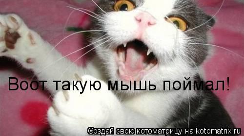 Котоматрица: Воот такую мышь поймал!