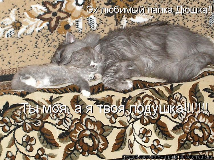 Котоматрица: Эх любимый папка Дюшка!!!!!!!!!!!!!! Ты моя, а я твоя подушка!!!!!!!
