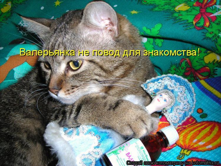 Котоматрица: Валерьянка не повод для знакомства!