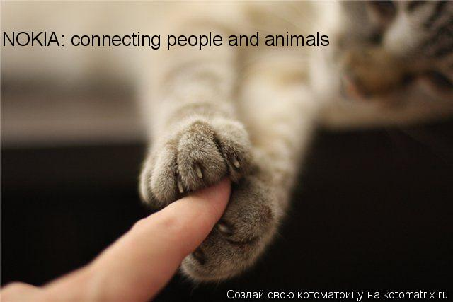 Котоматрица: NOKIA: connecting people and animals