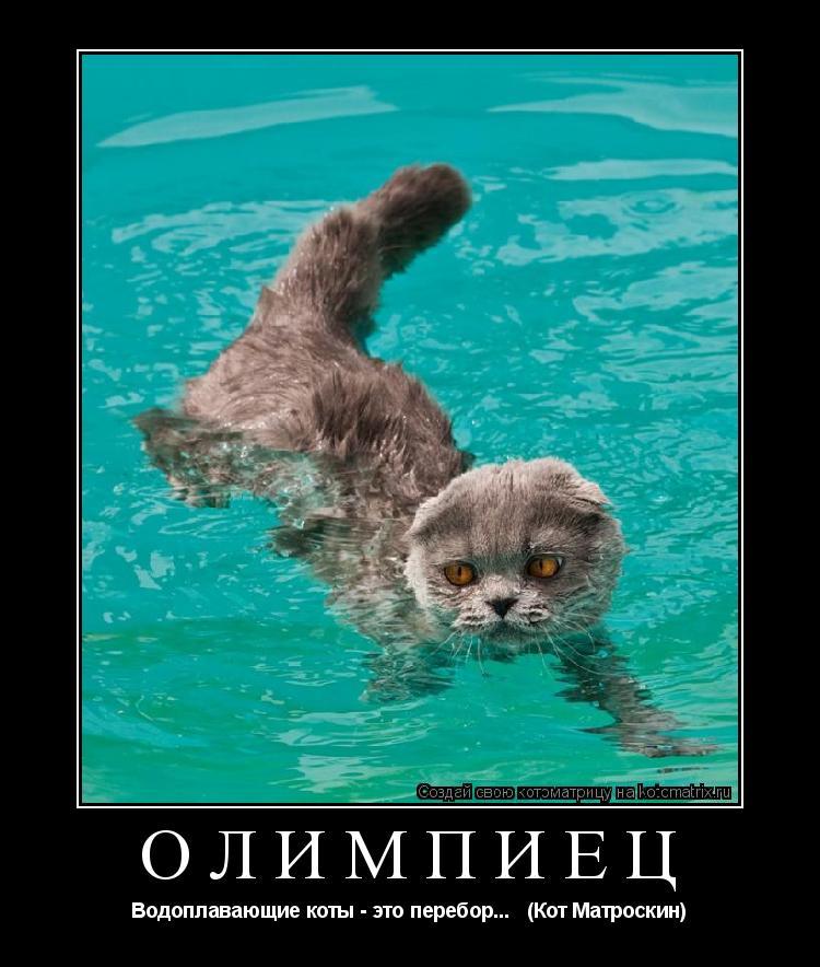 Котоматрица: Олимпиец Водоплавающие коты - это перебор...   (Кот Матроскин)