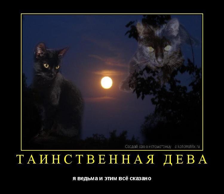Котоматрица: таинственная дева я ведьма и этим всё сказано