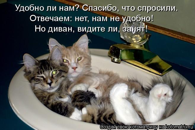Котоматрица: Удобно ли нам? Спасибо, что спросили.  Отвечаем: нет, нам не удобно!  Но диван, видите ли, занят!