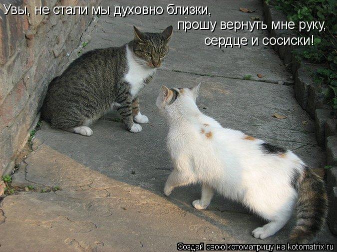 Котоматрица: Увы, не стали мы духовно близки, прошу вернуть мне руку, сердце и сосиски!