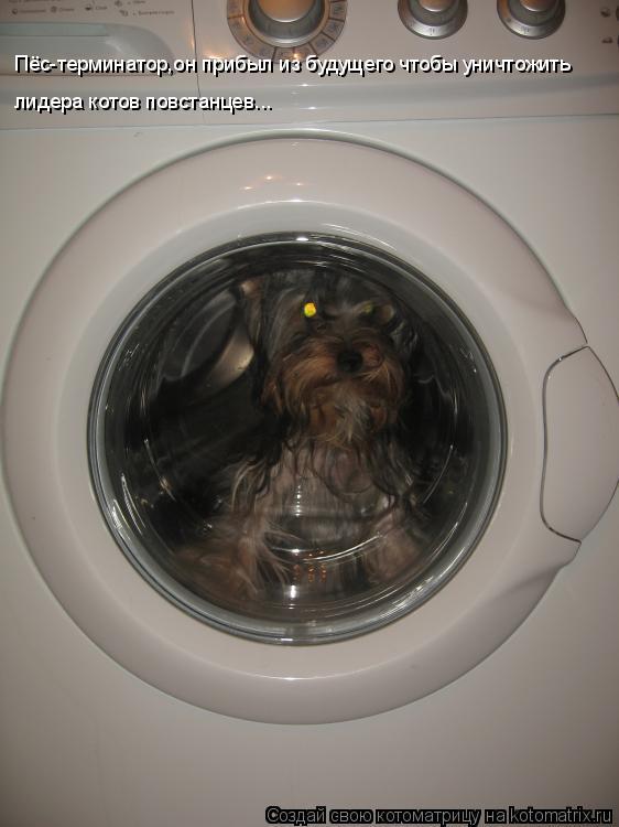 Котоматрица: Пёс-терминатор,он прибыл из будущего чтобы уничтожить  лидера котов повстанцев...