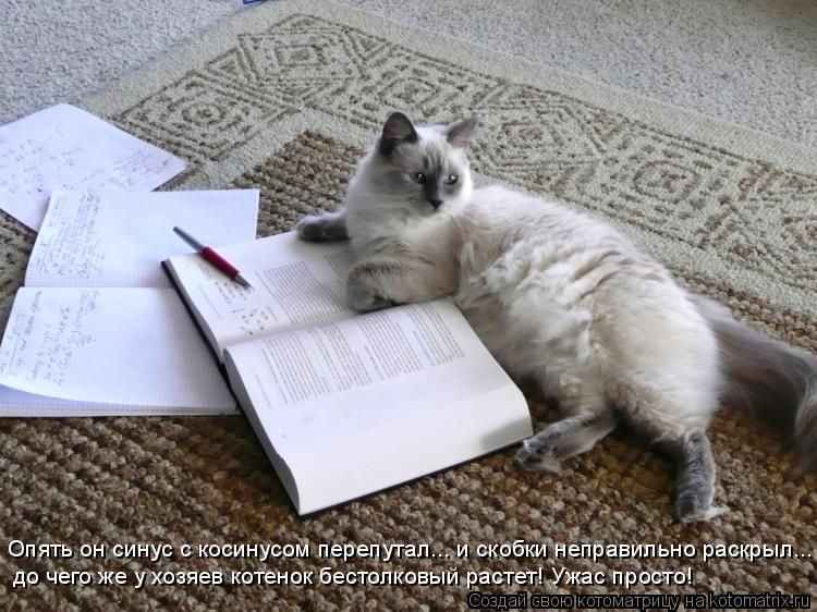 Котоматрица: Опять он синус с косинусом перепутал... и скобки неправильно раскрыл... до чего же у хозяев котенок бестолковый растет! Ужас просто!