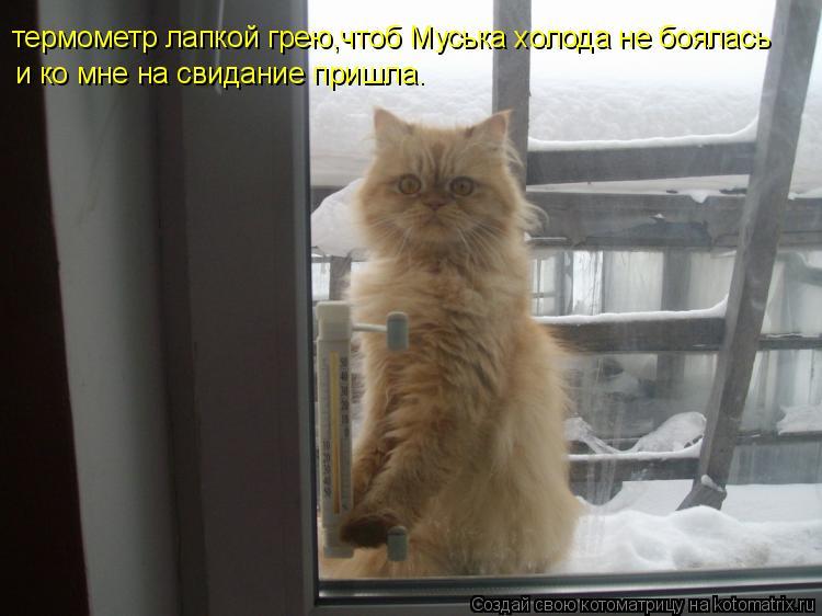 Котоматрица: термометр лапкой грею,чтоб Муська холода не боялась и ко мне на свидание пришла.