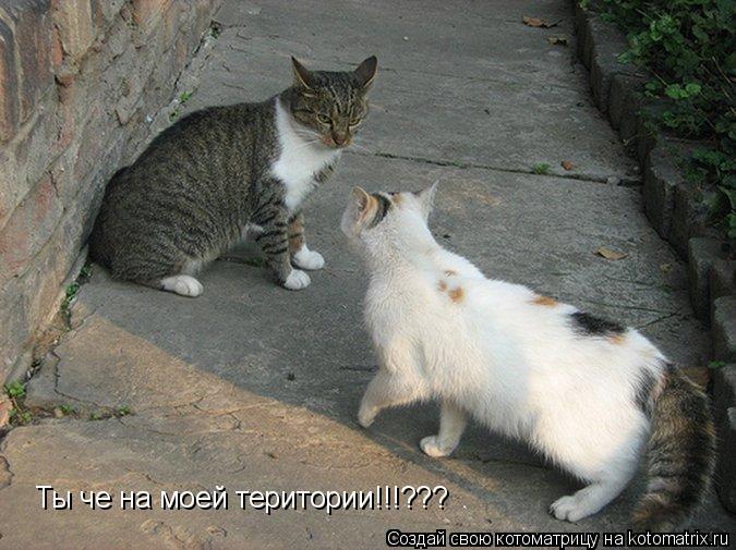 Котоматрица: Ты че на моей територии!!!???
