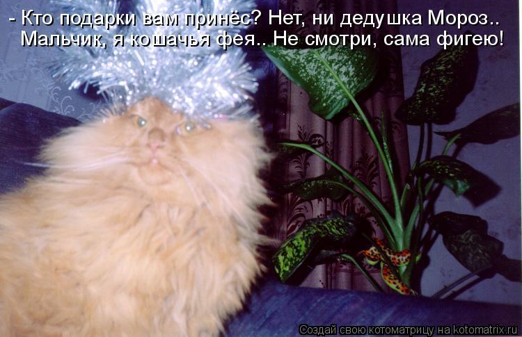 Котоматрица: - Кто подарки вам принёс? Нет, ни дедушка Мороз.. Мальчик, я кошачья фея.. Не смотри, сама фигею!