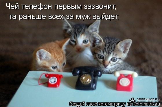 Котоматрица: Чей телефон первым зазвонит, та раньше всех за муж выйдет.