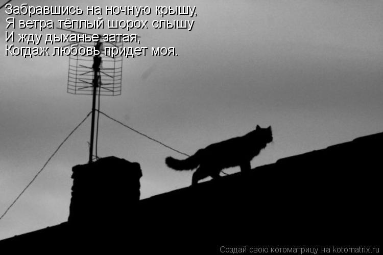 Котоматрица: Забравшись на ночную крышу, Я ветра тёплый шорох слышу И жду дыханье затая, Когдаж любовь придет моя.