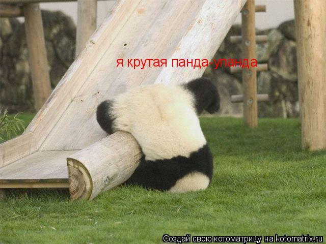 Котоматрица: я крутая панда-упанда