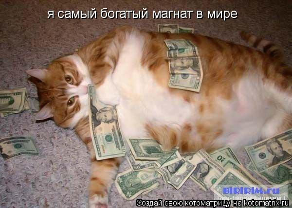 Котоматрица: я самый богатый магнат в мире