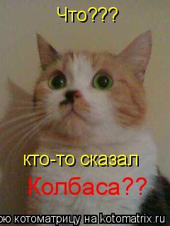 Котоматрица: Что???  кто-то сказал  Колбаса??