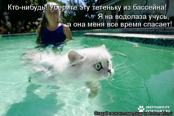 Котоматрица: Кто-нибудь! Уберите эту тетеньку из бассейна! Я на водолаза учусь,  а она меня все время спасает!
