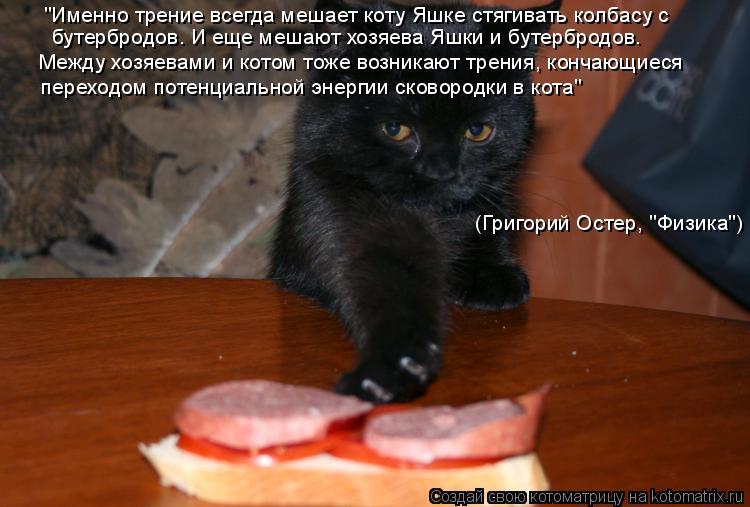 """Котоматрица: (Григорий Остер, """"Физика"""") """"Именно трение всегда мешает коту Яшке стягивать колбасу с бутербродов. И еще мешают хозяева Яшки и бутербродов. М"""