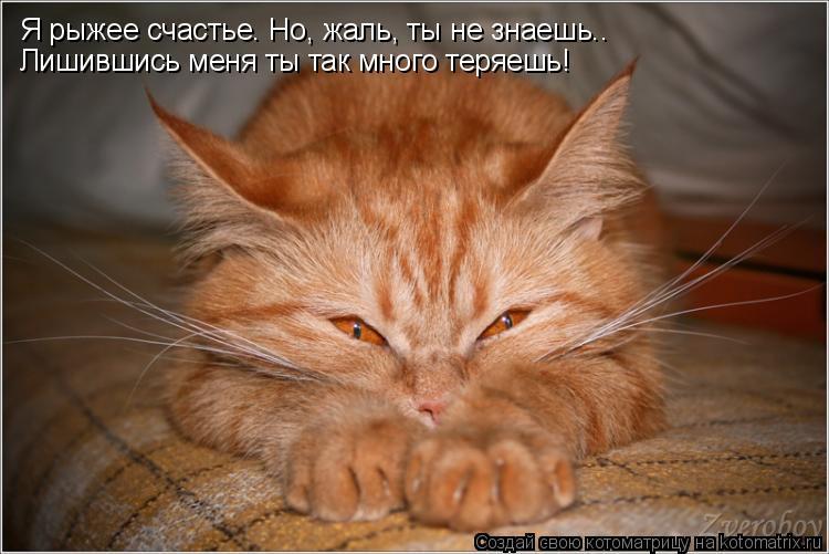 Котоматрица: Я рыжее счастье. Но, жаль, ты не знаешь.. Лишившись меня ты так много теряешь!
