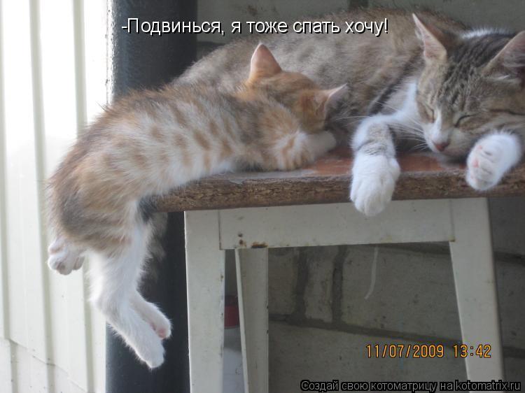Котоматрица: -Подвинься, я тоже спать хочу!