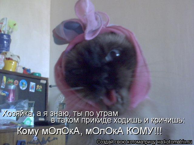 Котоматрица: Хозяйка, а я знаю, ты по утрам  в таком прикиде ходишь и кричишь: Кому мОлОкА, мОлОкА КОМУ!!!