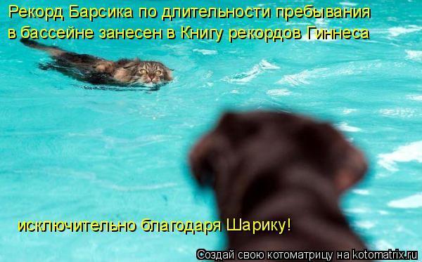 Котоматрица: Рекорд Барсика по длительности пребывания в бассейне занесен в Книгу рекордов Гиннеса исключительно благодаря Шарику!