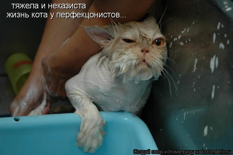 Котоматрица: тяжела и неказиста жизнь кота у перфекцонистов...
