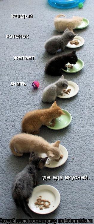 Котоматрица: каждый желает знать котенок где еда вкусней.....