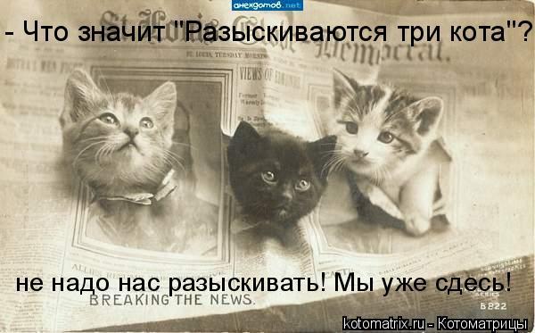 """Котоматрица: не надо нас разыскивать! Мы уже сдесь! - Что значит """"Разыскиваются три кота""""?"""