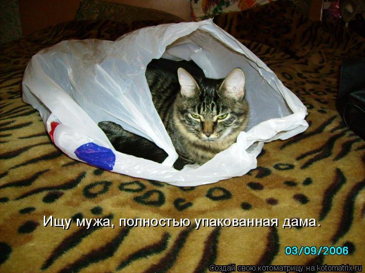 Котоматрица: Ищу мужа, полностью упакованная дама.