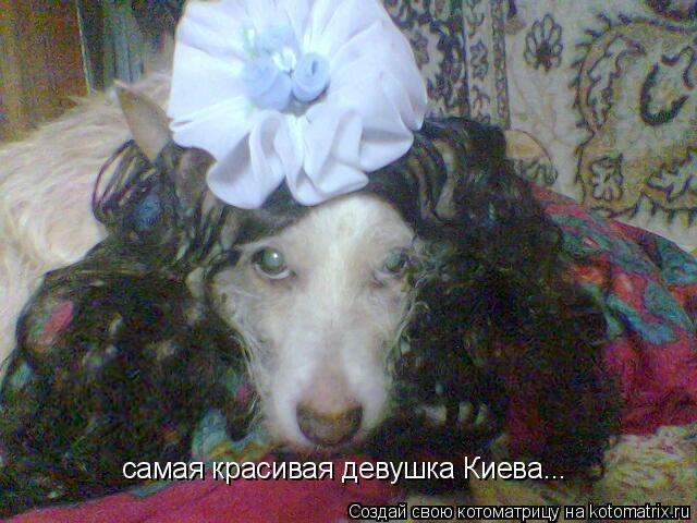 Котоматрица: самая красивая девушка Киева...