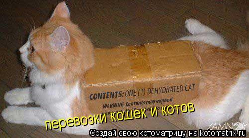 Котоматрица: перевозки кошек и котов