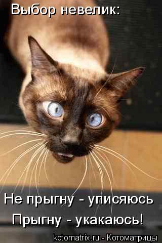 Котоматрица: Выбор невелик: Не прыгну - уписяюсь Прыгну - укакаюсь!