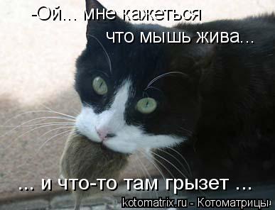 Котоматрица: -Ой... мне кажеться  что мышь жива... ... и что-то там грызет ...