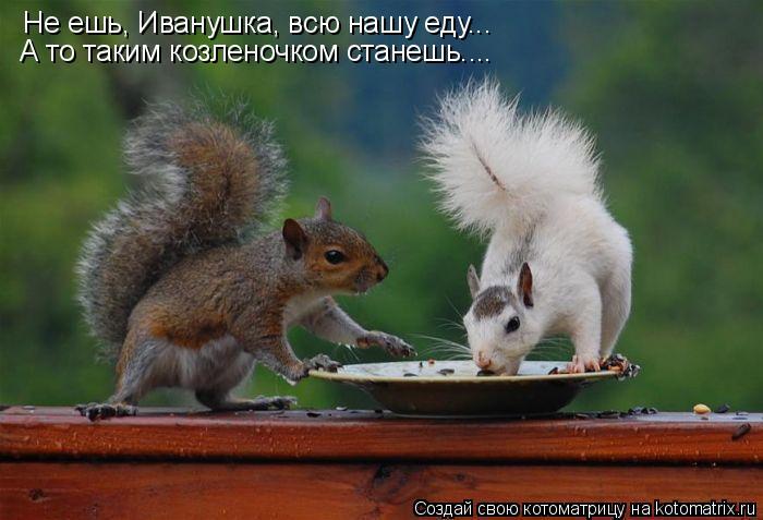 Котоматрица: Не ешь, Иванушка, всю нашу еду... А то таким козленочком станешь....