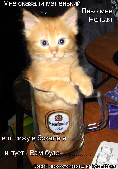 Котоматрица: Мне сказали маленький Пиво мне Нельзя вот сижу в бокале я и пусть Вам буде ...............