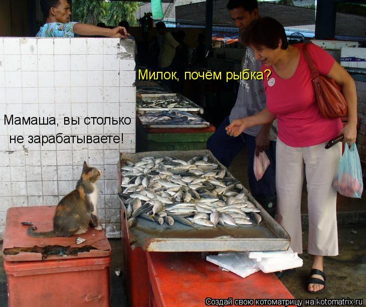 Котоматрица: Милок, почём рыбка? Мамаша, вы столько  не зарабатываете!