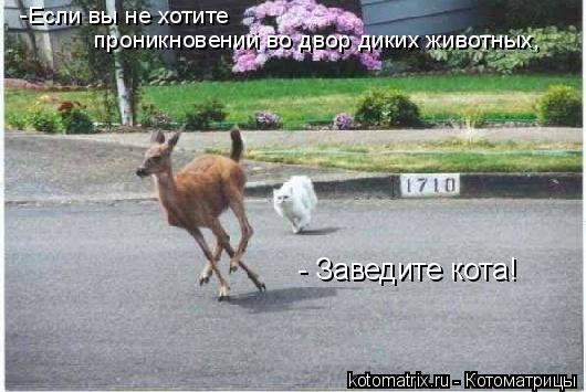 Котоматрица: -Если вы не хотите проникновений во двор диких животных, - Заведите кота!