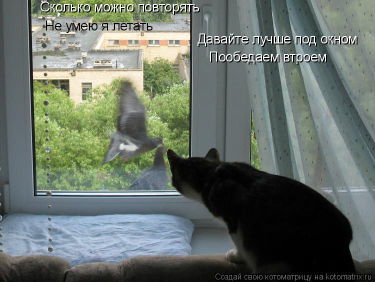 Котоматрица: Не умею я летать Давайте лучше под окном Сколько можно повторять  Пообедаем втроем