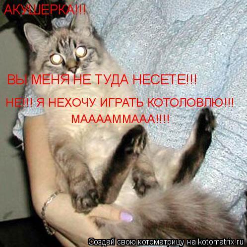 Котоматрица: АКУШЕРКА!!! ВЫ МЕНЯ НЕ ТУДА НЕСЕТЕ!!! НЕ!!! Я НЕХОЧУ ИГРАТЬ КОТОЛОВЛЮ!!! МААААММААА!!!!