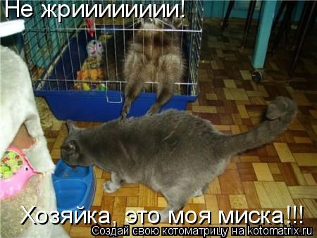 Котоматрица: Не жрииииииии! Хозяйка, это моя миска!!!