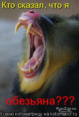 Котоматрица: Кто сказал, что я обезьяна???