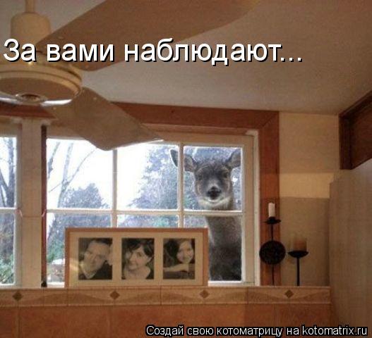 Котоматрица: За вами наблюдают...