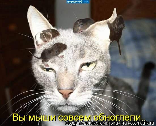 Котоматрица: Вы мыши совсем обноглели..