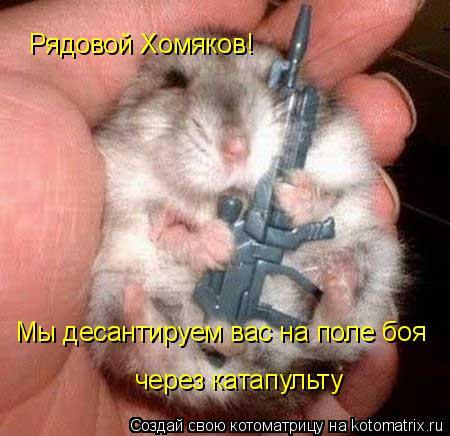 Котоматрица: Рядовой Хомяков! Мы десантируем вас на поле боя через катапульту