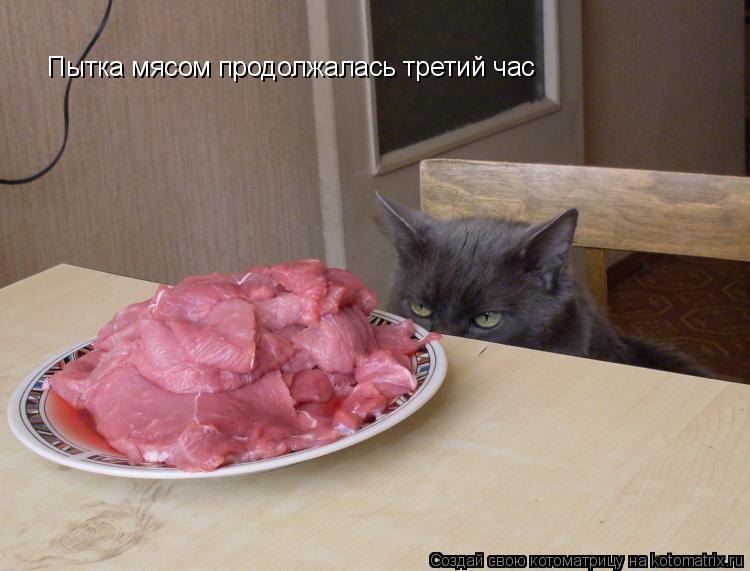 Котоматрица: Пытка мясом продолжалась третий час