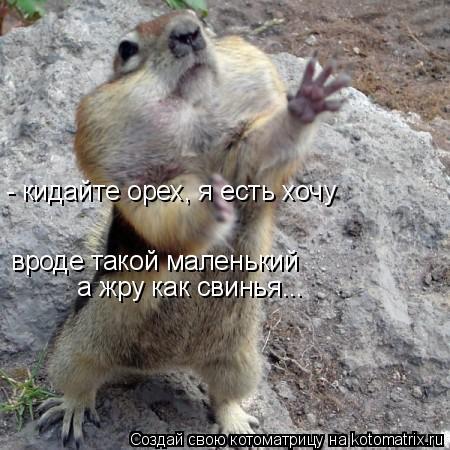 Котоматрица: вроде такой маленький а жру как свинья... - кидайте орех, я есть хочу  (